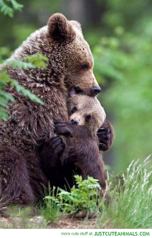 bear-hug-cute-bears-cuddles-baby-mom-pics-animal-pictures-pics